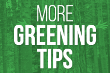Easy Ways to Go Green for Earth Day